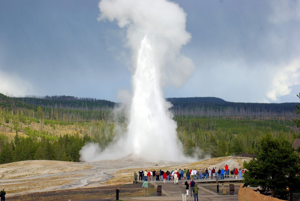 Old Faithful Geyser erupting, spectators are observing on the wooden boardwalk. Trees in the background and overcast weather, cloudy day in yellowstone national park.
