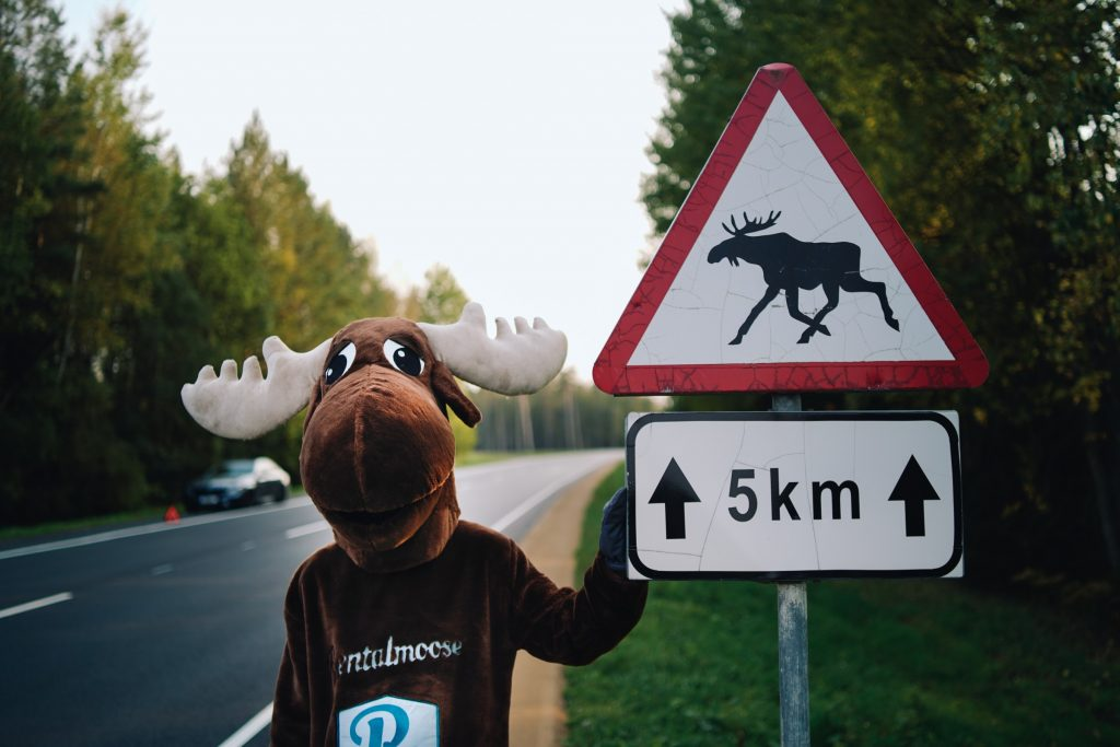Rental Moose mascot posing with watch out for moose road sign while waiting for roadside assistance. learn about roadside assistance and rental car insurance in our blog post.